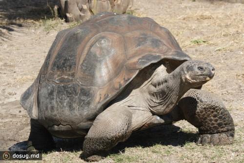 Гигантская черепаха – 256 лет