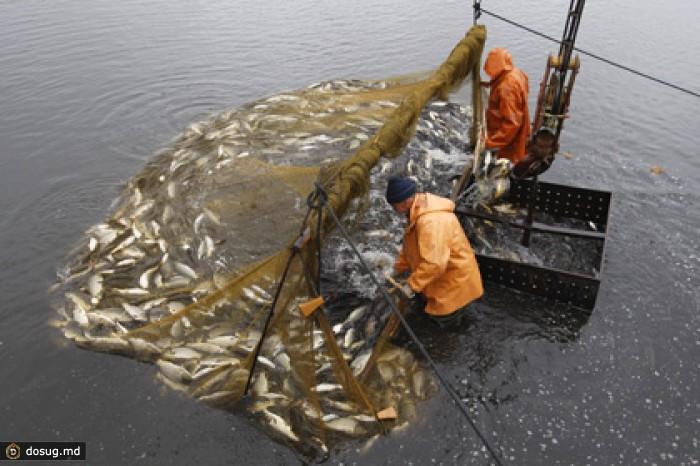 сети для промышленной ловли рыбы