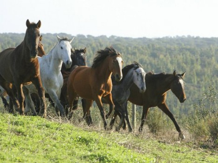 Секс коней табуне