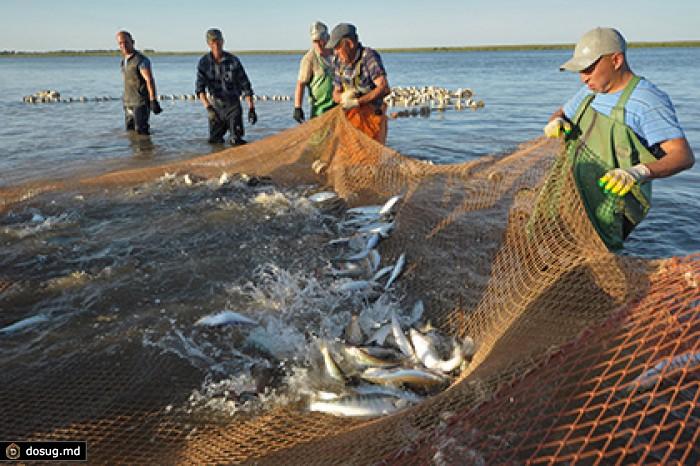 дрифтерная рыболовная сеть