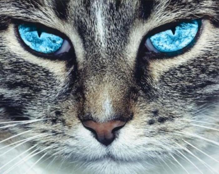 Картинки на аватар вацап
