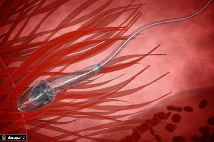 kak-bistro-prodvigaetsya-spermatozoid