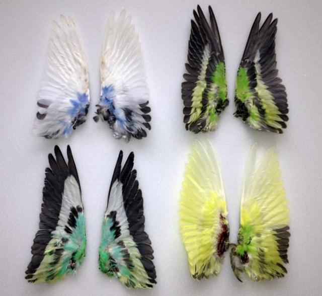 Изделия из перьев своими руками