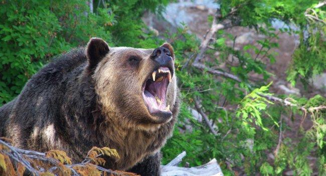 Incredible yellowstone national park wildlife